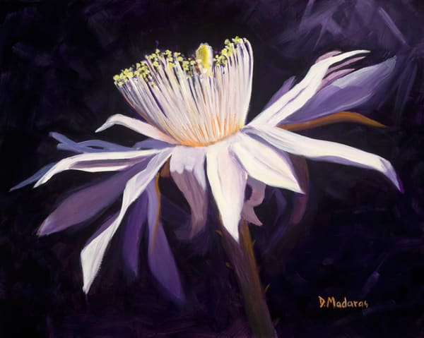 Night Blooming Cereus II | Madaras Gallery Tucson