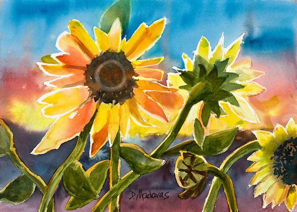 Sunflowers at Sunset | Southwest Art Gallery Tucson