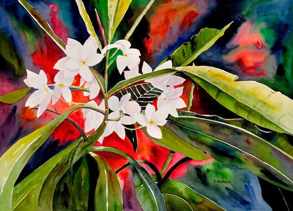Tropical Heat | Southwest Art Gallery Tucson | Madaras