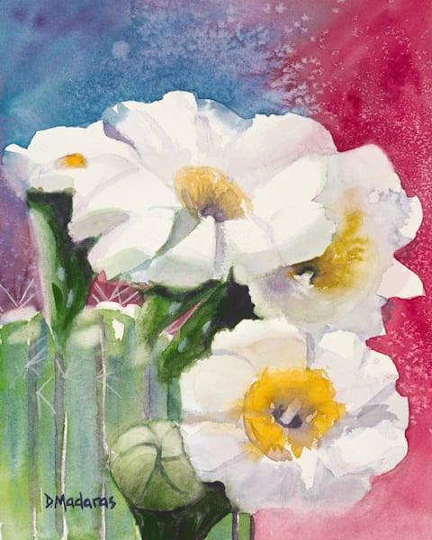 Saguaro Blooms | Southwest Art Gallery Tucson | Madaras