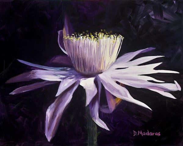 Night Blooming Cereus I | Southwest Art Gallery Tucson