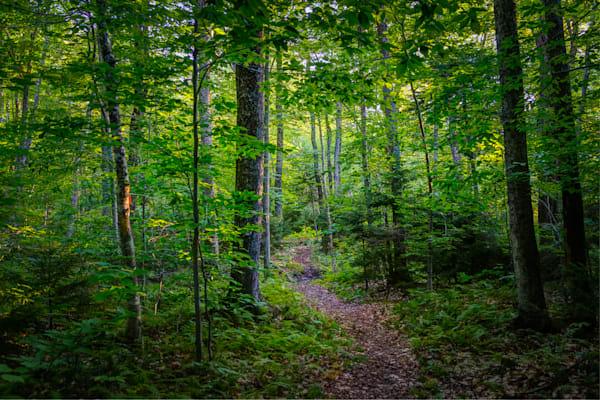 Photography, Vermont, forest, landscape