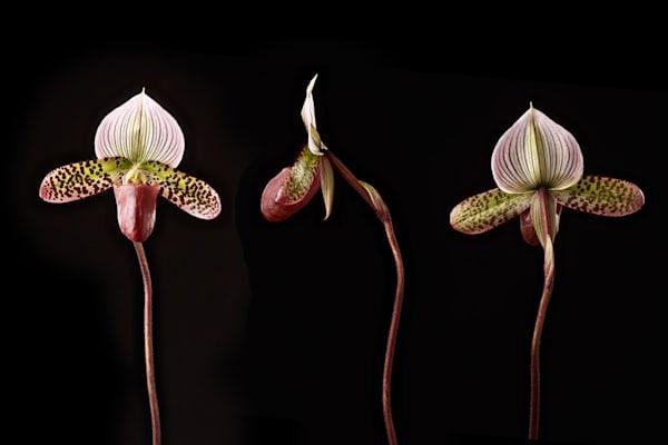Shop Floral Photos | Susan Michal Fine Art Photographer