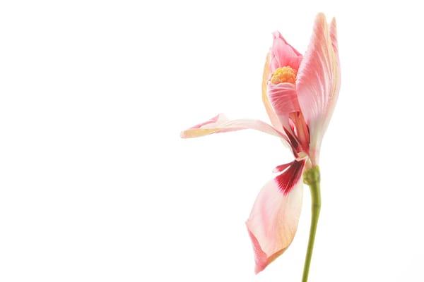 Paradise | Flower Photography | Susan Michal Fine Art