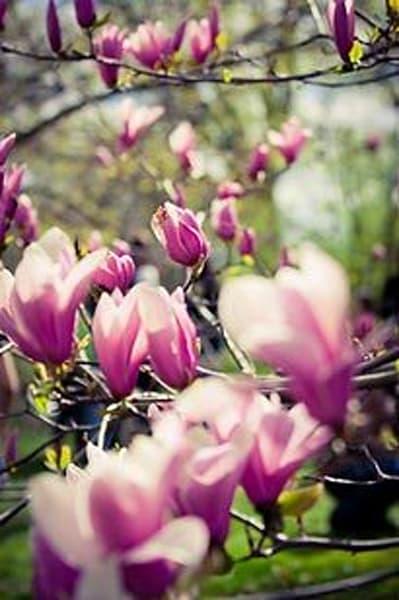 Vibrant Flowers VII