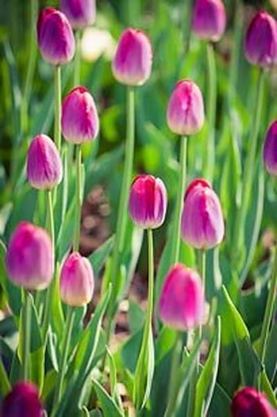 Vibrant Flowers XIII
