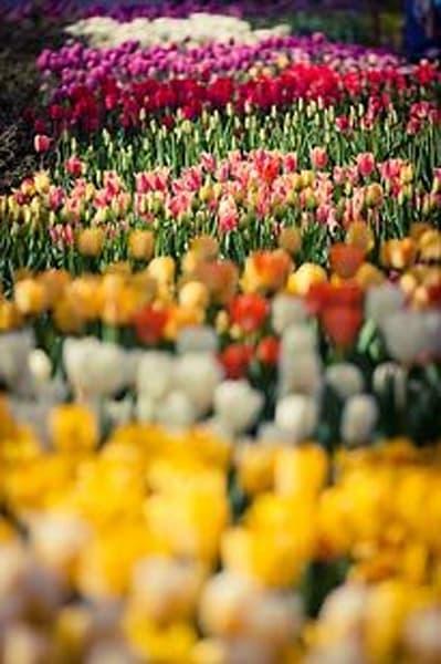 Vibrant Flowers XV