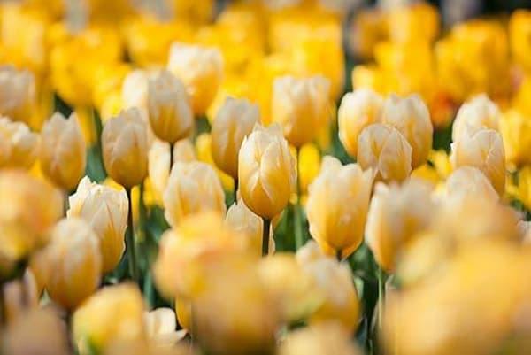 Vibrant Flowers XVI