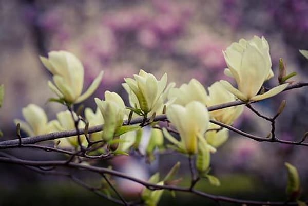 Vibrant Flowers XVIII
