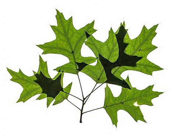 Leaves, Grouping