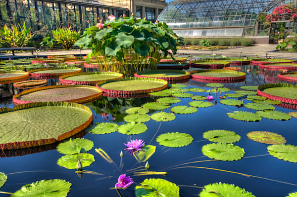 Lily Pads at Longwood Fine Art Photograph | JustBob Images