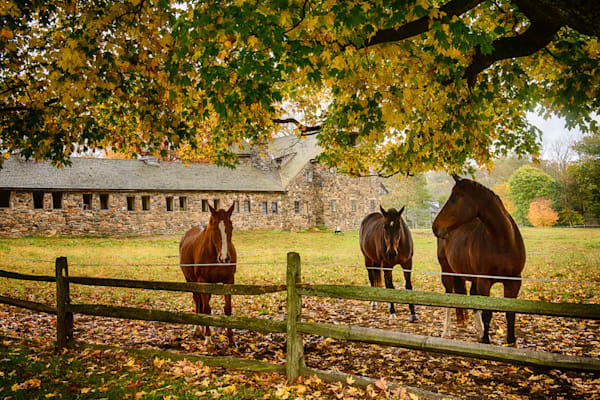 Haskell Horses Fine Art Photograph | JustBob Images