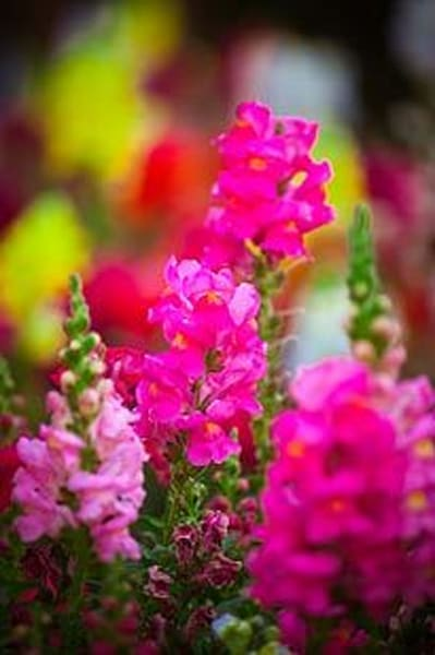 Vibrant Flowers I