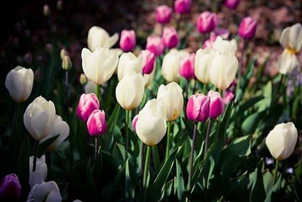 Vibrant Flowers V