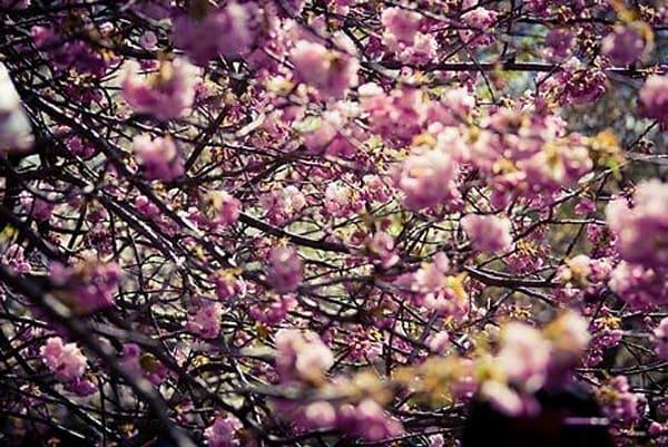 Vibrant Flowers II