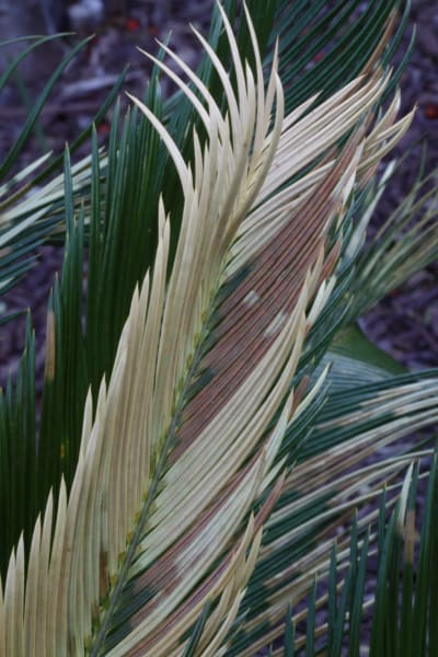 Palms abstract