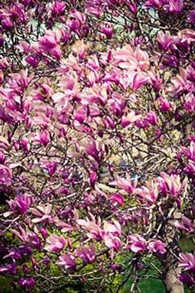 Vibrant Flowers VI