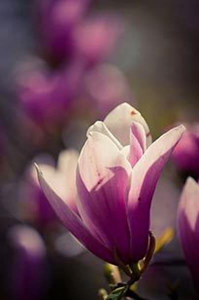 Vibrant Flowers X