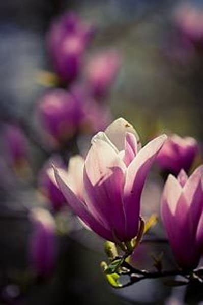 Vibrant Flowers XI