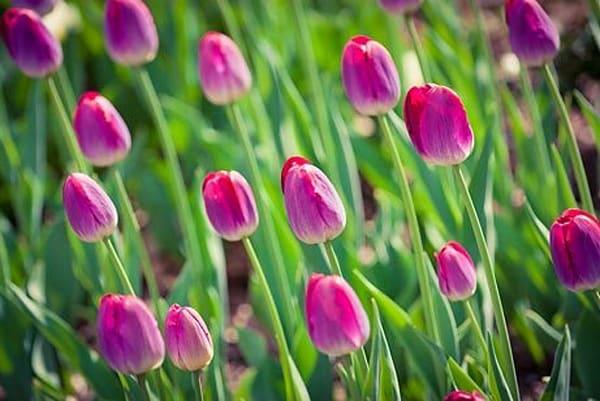 Vibrant Flowers XII