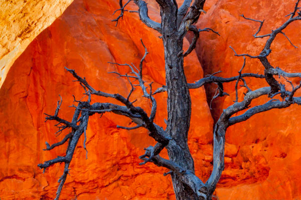Rocks and trees abstract from Arches National Park