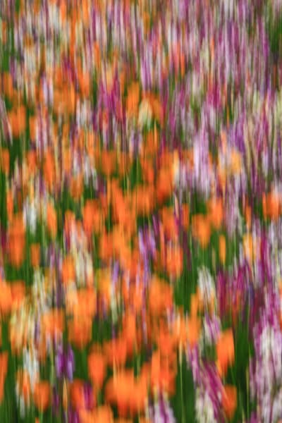 Blurred flowers abstract