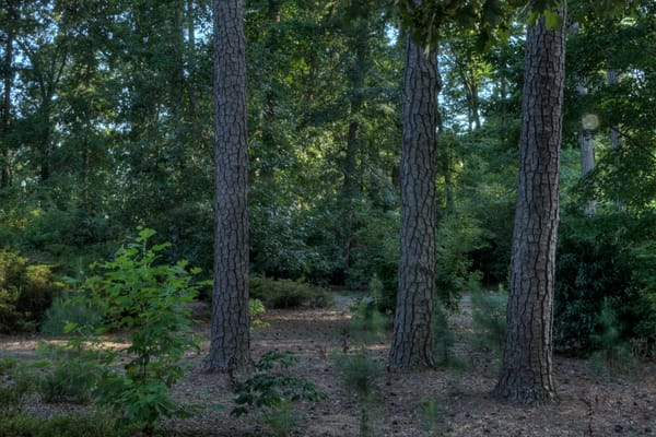 Fine Art Photographs of Norfolk Forests by Michael Pucciarelli