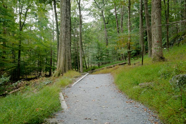 Fine Art Photograph of Path in Cunningham Forest by Michael Pucciarelli