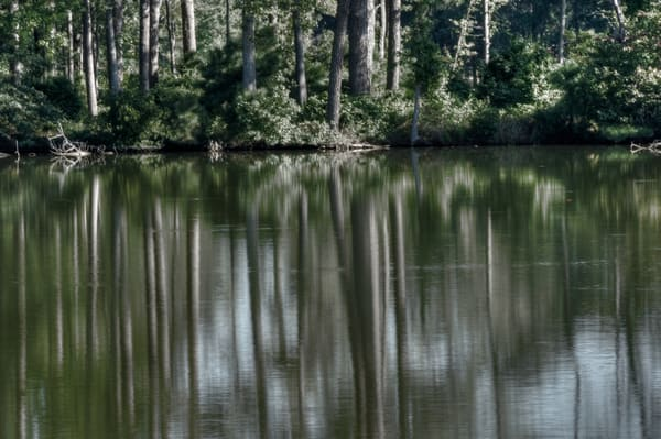 Fine Art Photograph of Norfolk Forest Reflections by Michael Pucciarelli