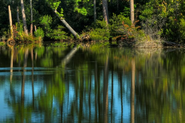Norfolk Forest Reflection Fine Art Photographs by Michael Pucciarelli