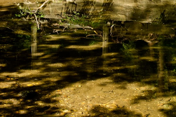 Fine Art Photograph of Tree Trunk Reflections in Rock Creek Park by Michael Pucciarelli