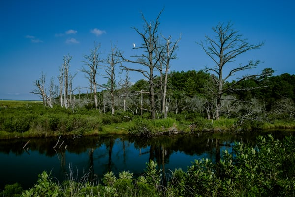 Assateague Fine Art Photograph of Reflections by Michael Pucciarelli