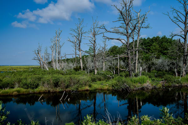 Fine Art Photograph of Assateague Reflections by Michael Pucciarelli