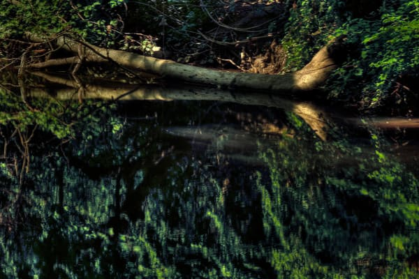 Fine Art Photograph of Tree Trunk Reflection in Rock Creek by Michael Pucciarelli