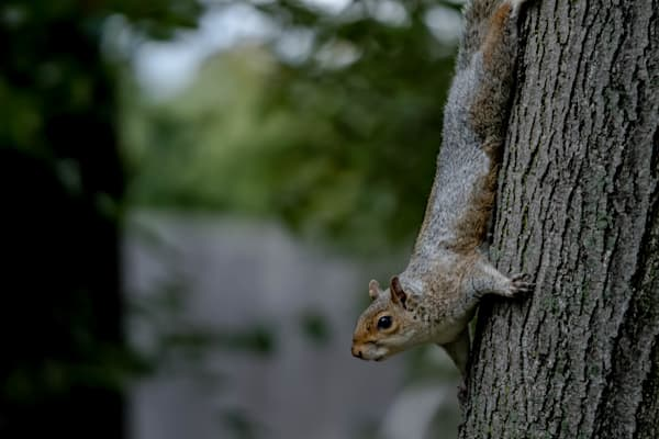 Fine Art Photograph Squirrel in Washington DC by Michael Pucciarelli
