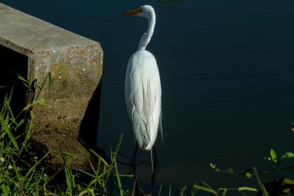 Fine Art Photographs of Wild Birds in St. Augustine and Norfolk by Michael Pucciarelli