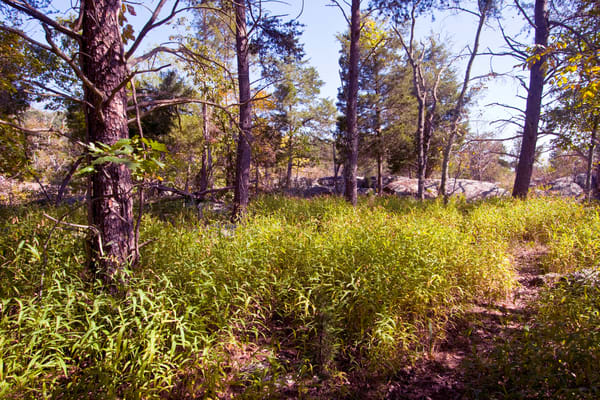 Fine Art Photograph of Great Falls Forest by Michael Pucciarelli
