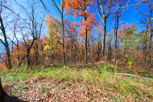 Fine Art Photograph of an Autumn Shenandoah Forest by Michael Pucciarelli