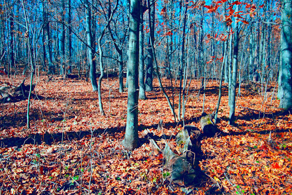 Fine Art Photograph of Shenandoah Forest During Autumn by Michael Pucciarelli