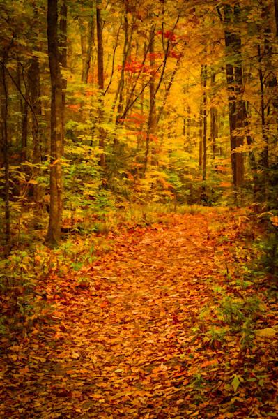 Tremont Trail Fine Art Photograph | JustBob Images
