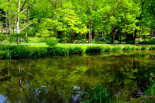 A Fine Art Photograph of Brookside Gardens Reflections by Michael Pucciarelli