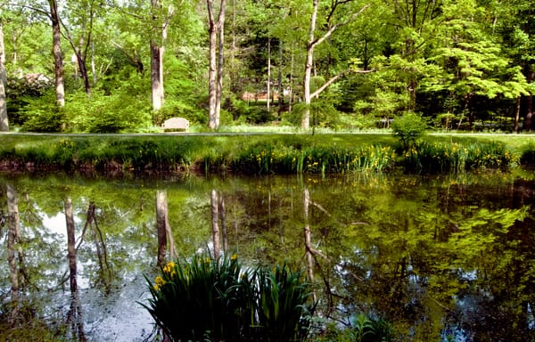 Fine Art Photograph of Brookside Reflection by Michael Pucciarelli