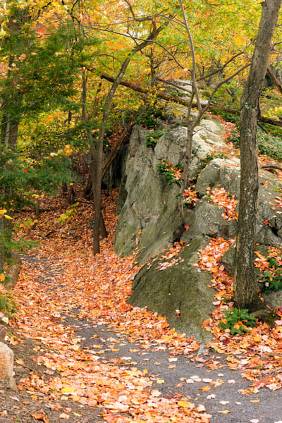 Trapps Trail Autumn - Mohonk Preserve - New Paltz - New York