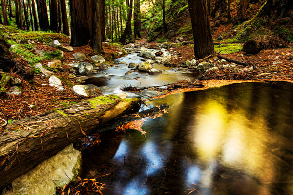 View Of Hare Creek in Limekiln State Park Photograph for Sale as Fine Art
