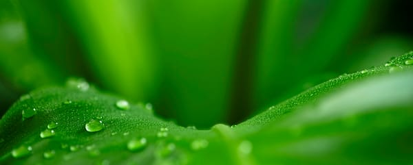 Lush dew drops 03