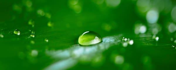 Lush dew drops 01