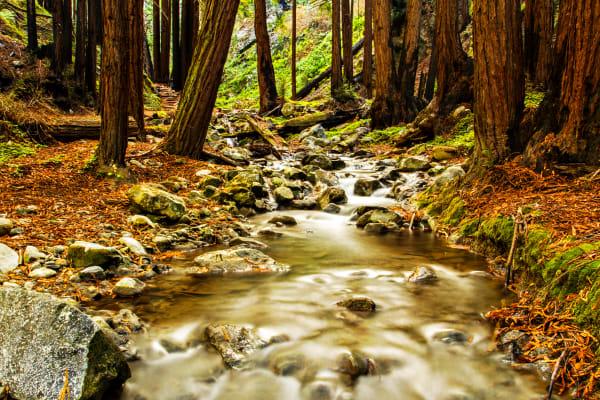 Hare Creek Along Hare Creek Trail Photograph for Sale as Fine Art