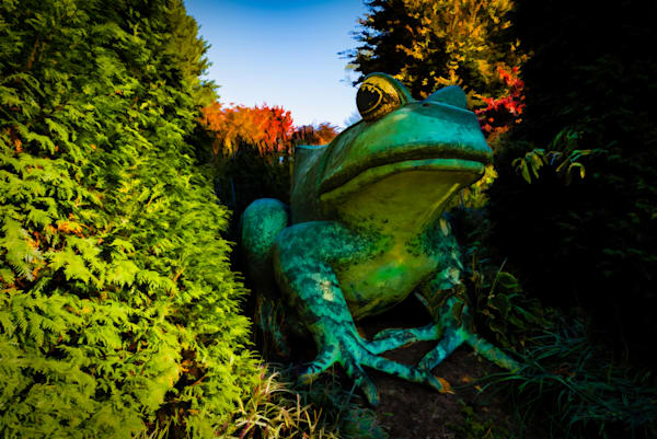 Fredericks Frog Fine Art Photograph | Fredericks Frog