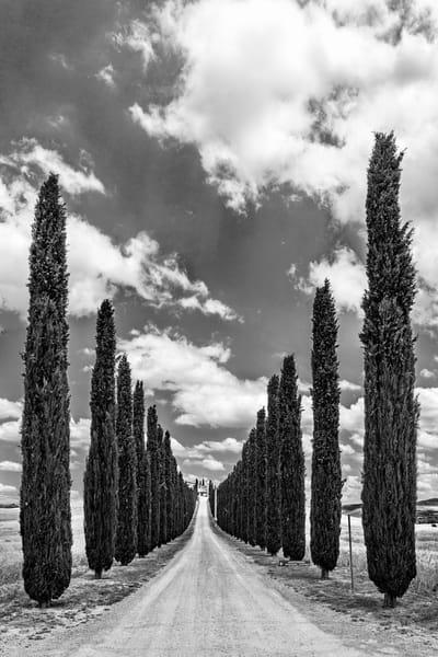 Cypress Entrance B&W - Tuscany - Italy.tif