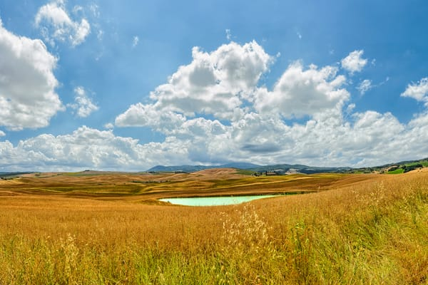 Wheat and Pond - Val d'Orcia - Italy